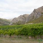 Brennan Winery Vines - Queenstown, New Zealand