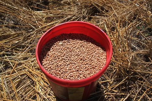 Our sample. 13.4% moisture, good to go!