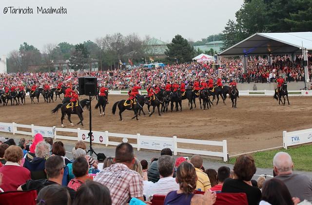 blogi horses2