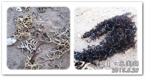 130628-金色沙灘上的珊瑚和藻類