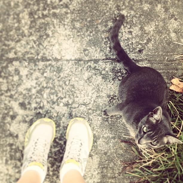 #foundwhilerunning: kitty cat!