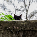 Le chat sauvage de Sauve by Agnelou