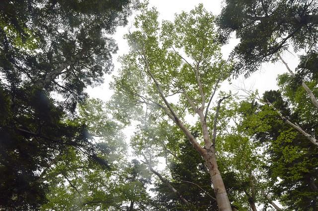 西穂高山荘への登山道