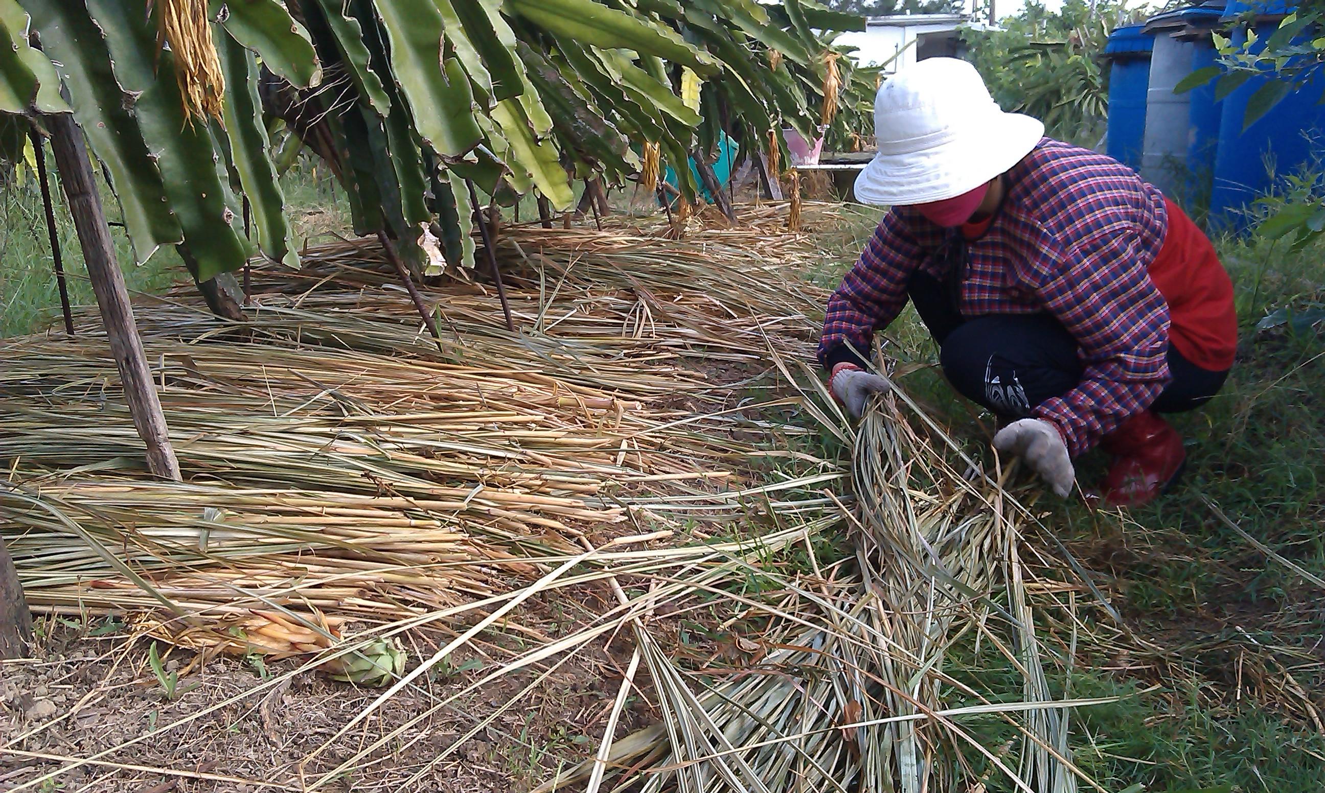 10月志工協助除草與覆蓋 攝影大苑