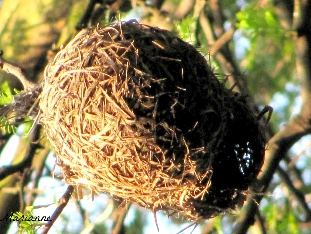 Patterns Bird Nest