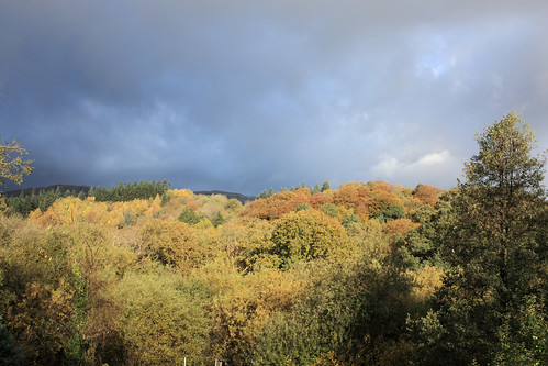 Autumn from my window by Helen in Wales