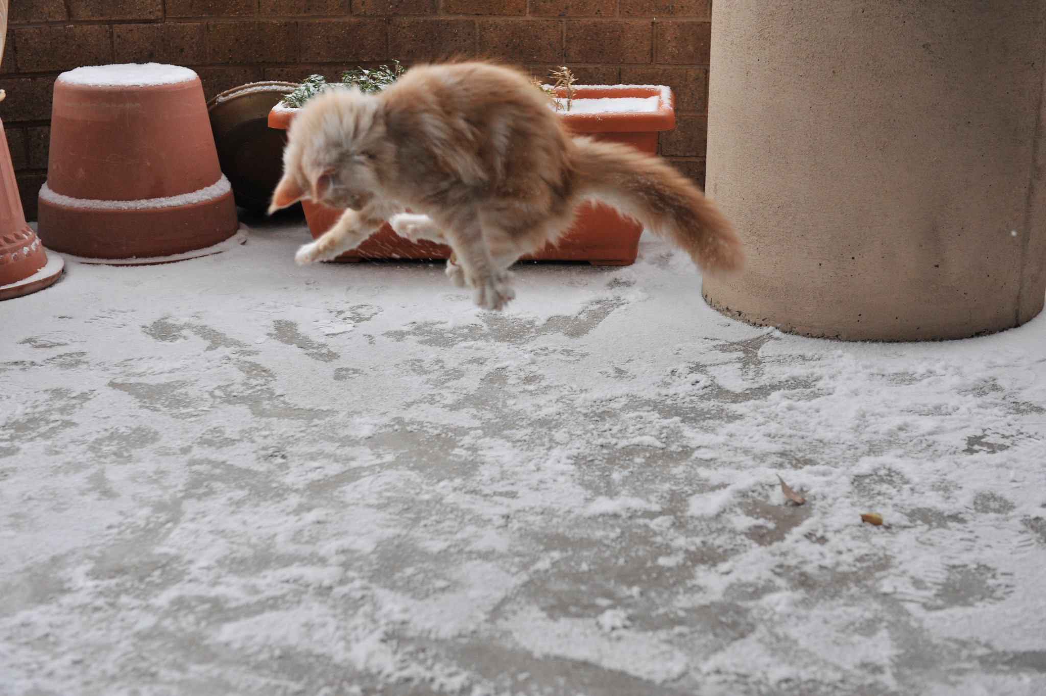 Jonesy's first snow