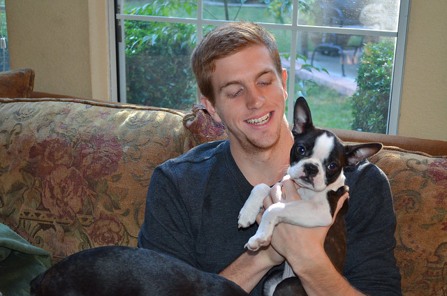 A young man sitting on a couch holding a Boston Terrier puppy.