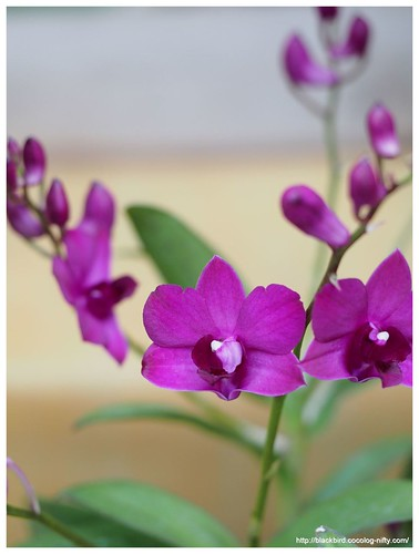 Orchid #10