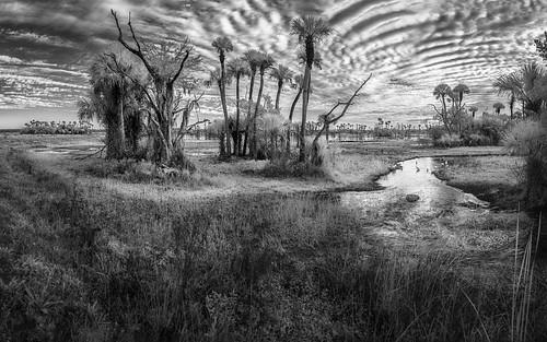 sky blackandwhite bw panorama usa cloud reflection tree bird water grass landscape ir orlando florida palm infrared cypress centralflorida swampmarsh orlandowetlandspark