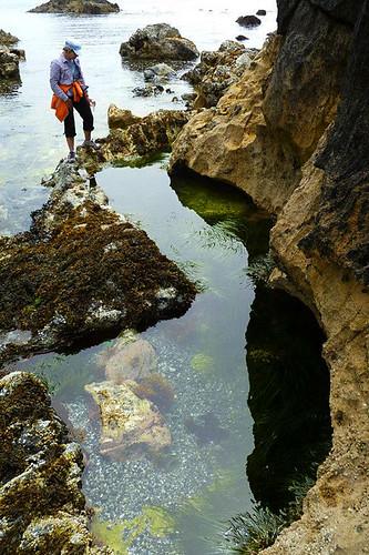Benson Gully, Broken Group Islands, Barkley Sound, Pacific Rim, Vancouver Island, British Columbia, Canada