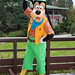 DLP Feb 2014 - Meeting Goofy at Disney's Sequoia Lodge