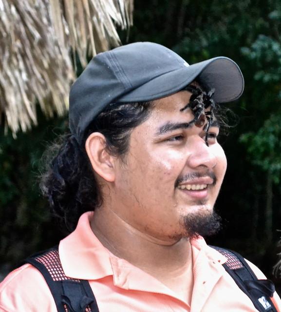 Tarantula Tikal Guatemala