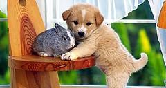 piccoli amici