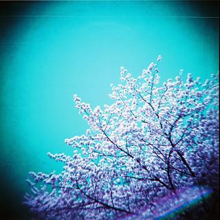 chrome spring
