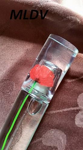 avis flower by kenzo