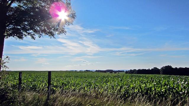 Maisfeld Rügen