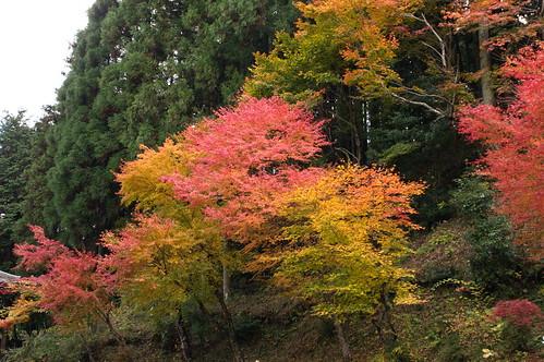 【写真】2012 紅葉 : 寂光院/2020-08-29/IMGP6331