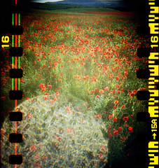 Poppies, sprocket holes, lens flare
