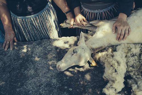 tosquia em cabril