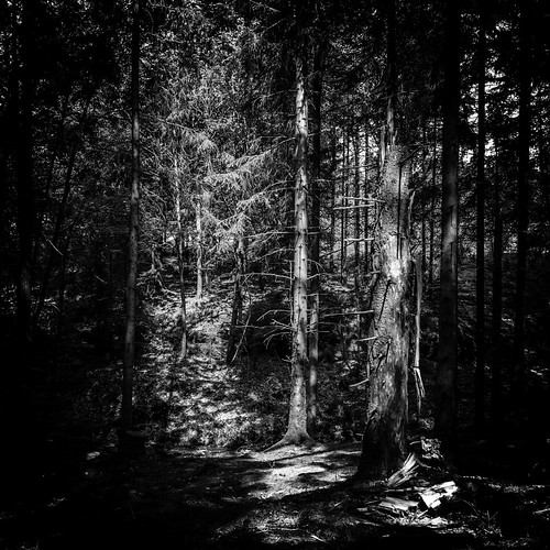trees light blackandwhite bw forest göteborg photography photo woods europe photographer image sweden gothenburg may fav20 photograph 100 sverige 24mm f56 scandinavia fav30 squarecrop goteborg kungsbacka halland tiltshift västragötaland fav10 2013 tse24mmf35l ¹⁄₁₀₀sec eos5dmarkiii mabrycampbell may272013 201305270h6a2455