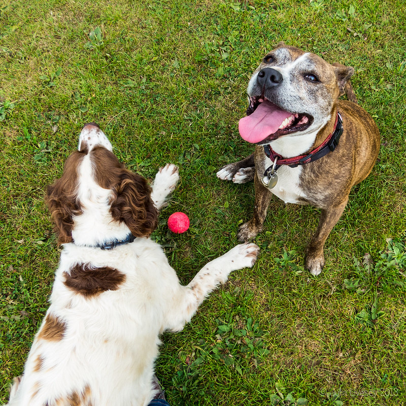 Jez and Max take a rest from playing ball