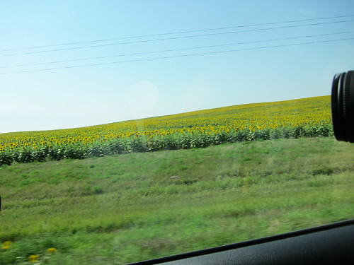 sky, sunflowers, road IMG_5833