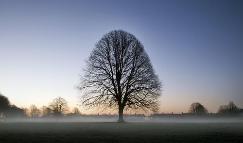 park uk morning trees mist tree wales sunrise dawn interestingness britain cymru explore caerdydd llandaff pontcanna canoneos5d explored wentloog stevegarrington