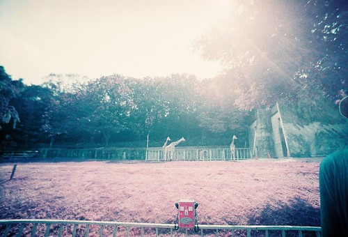 LomoChrome Purple ISO100
