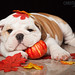 Marley and Friends by Lakeshore Bulldogs