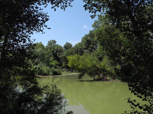 Tudela de Duero. Bosque de ribera