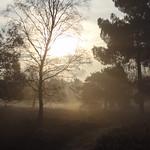 Geldrop fog