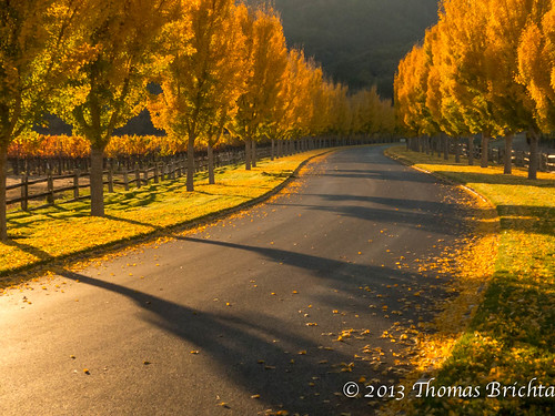 leica fall colors napa winecountry ctype tom911r7 thomasbrichta 2013fall
