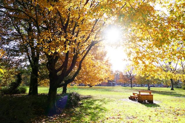 Amsterdam Westerpark autumn sunshine