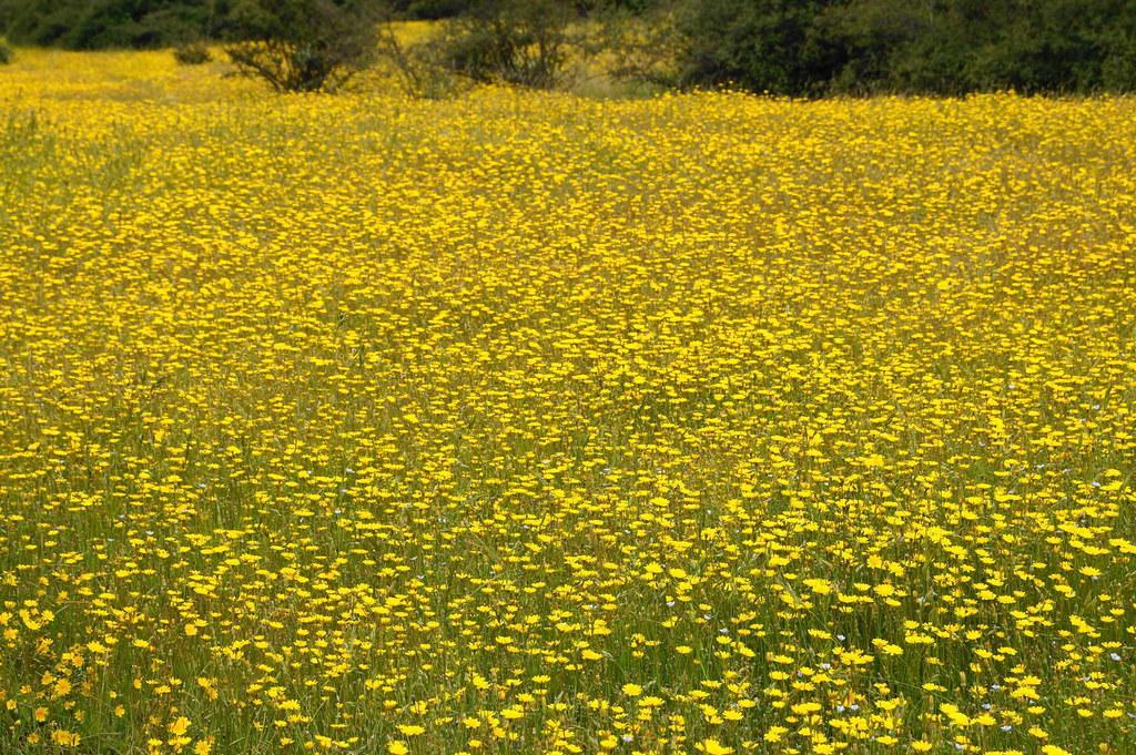 Picssr jard n bot nico nacional vi a del mar chile 39 s for Jardin botanico nacional