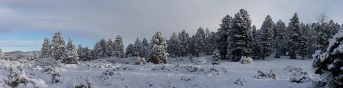 arizona autoimport bw flagstaff landscape panorama ponderosapines snow trees weather unitedstates thebestof flickr