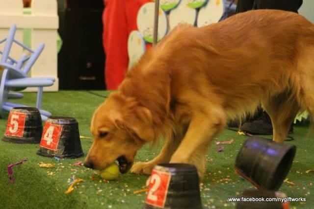 dog show (2)