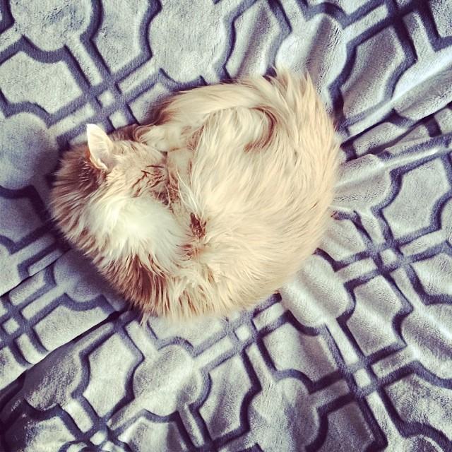 Snoozer  #catsofinstagram