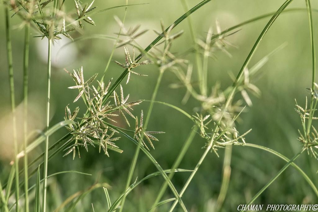 IMAGE: http://farm4.staticflickr.com/3761/12179002245_4f23068b11_b.jpg