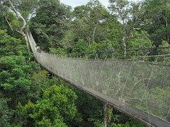 rainforest(1.0), suspension bridge(1.0), canopy walkway(1.0), forest(1.0), rope bridge(1.0), jungle(1.0), bridge(1.0),