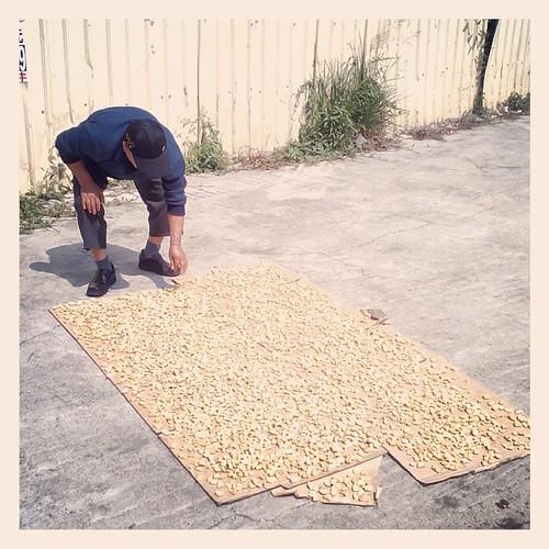 Midday Nuts. #caotun #nantou #taiwan