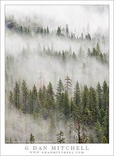 Forest and Valley Fog