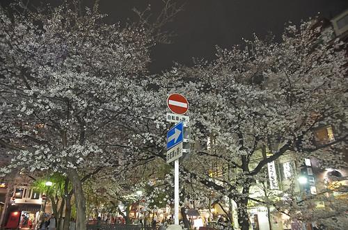 【写真】2014 桜 : 木屋町通/2021-09-17/IMGP5613