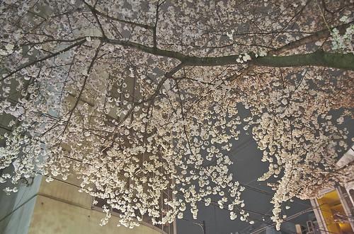 【写真】2014 桜 : 木屋町通/2021-09-17/IMGP5615