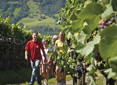 Vinařské vesnice vúdolí Rýnu