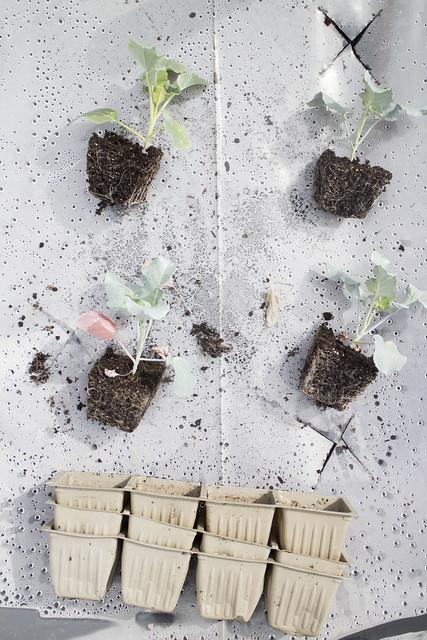 Seedling Planting Spring 2014_14