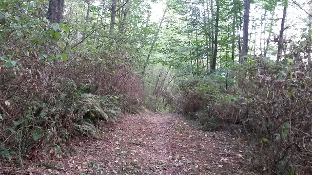 Narbeck trail
