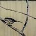 Mockingbird by randyherring
