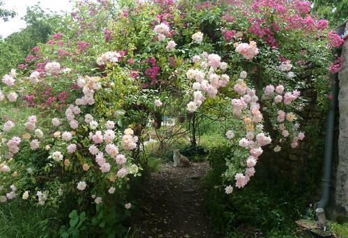 tous ces rosiers que l'on aime - floraisons 9033997799_cc996ae906