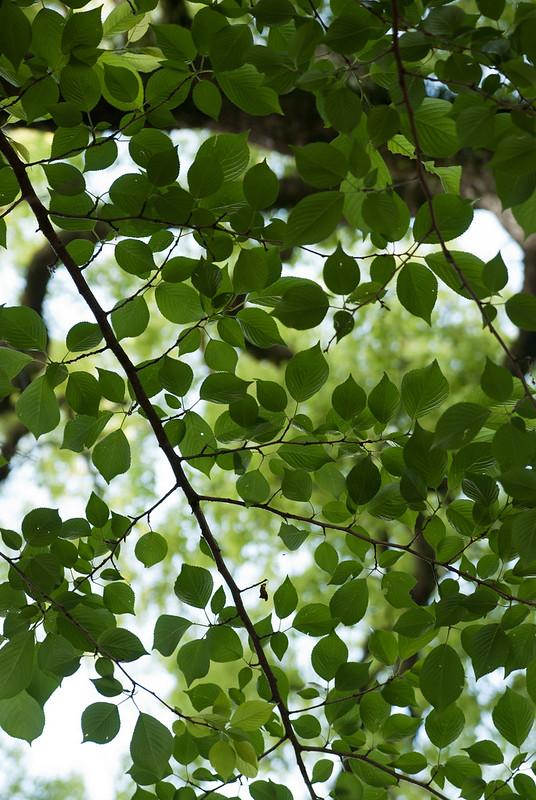緑foliage